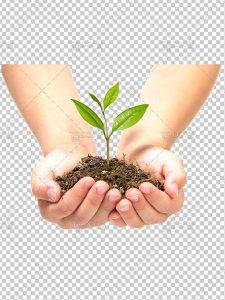 عکس دست و جوانه گیاه در خاک PNG دوربری شده با کیفیت و سایز بالا