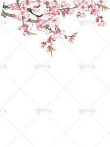 عکس شکوفه بهاری PNG دوربری شده با کیفیت بالا با رنگ صورتی