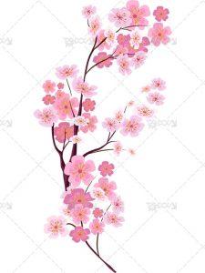 عکس شکوفه دوربری PNG بدون بک گراند با کیفیت بالا و طراحی زیبا