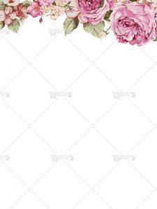 گل رز صورتی PNG دوربری شده با کیفیت و سایز بالا و طراحی زیبا