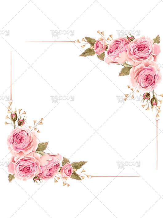 دانلود تصویر فریم گلدار PNG دوربری گل رز صورتی با کیفیت بالا